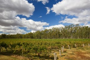 Longleat Wines
